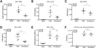 pseudomonas aeruginosa exou augments neutrophil transepithelial