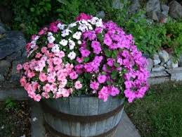 11 best whiskey barrel planters images on pinterest pots