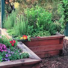 the domestic curator a garden of herbs