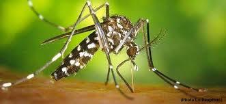 moustique dans ma chambre les moustiques ou moi échos dans ma tête pour surdoués