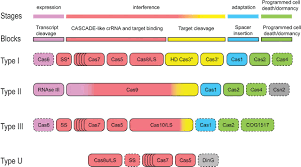 the basic building blocks and evolution of crispr u2013cas systems