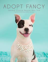 nj pet photographer adopt 2nd chance rescue nyc new jersey pet