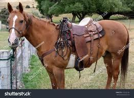 horse saddle quarter horse saddle stock photo 116125156 shutterstock
