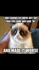 Cute Christmas Meme - 39 best grumpy cat all week images on pinterest grumpy cat funny