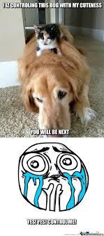 Cute Pet Memes - adorable dog memes image memes at relatably com