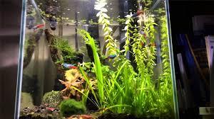 Dramatic Aquascapes The Best Nano Tank Setups The Aquarium Guide
