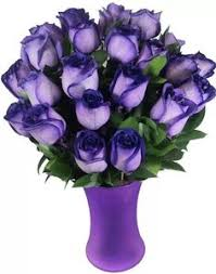 purple roses for sale beautiful beautiful roses more purple