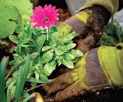 Frankie Flowers - how to get your garden growing advice from frankie u0027flowers