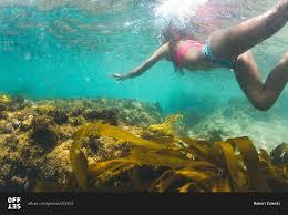 California snorkeling images Snorkeling in a bikini near divers cove in laguna beach jpg