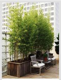 Potted Plant Ideas For Patio by Potted Bamboo Plants For Privacy On The Deck I Wanna Yard Like