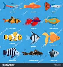 aquarium ocean fish breeds underwater bowl stock vector 730754335
