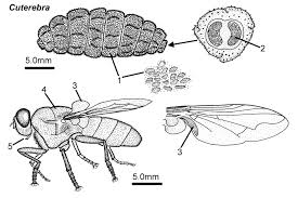 Can Bed Bugs Live On Cats Worms Mites Ticks And Other Bugs That Live On Cats