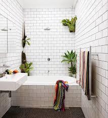 bathroom astonishing best bathroom plants 2017 white wall paint
