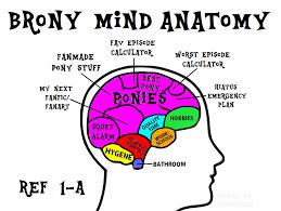 Brony Memes - 1199432 anatomy brain brony fandom fandom overload funny