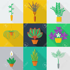 illustration of houseplants indoor and office plants in pot