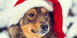 christmas gifts for dogs puppy christmas gifts hellow dog