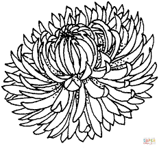 chrysanthemum 4 coloring page free printable coloring pages