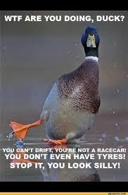 Funny Duck Meme - best photos of stupid duck jokes funny duck face meme funny duck
