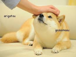 Such Doge Meme - such petting doge know your meme