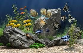 wallpaper ikan bergerak untuk pc wallpaper ikan bergerak dalam aquarium wallpapers pinterest