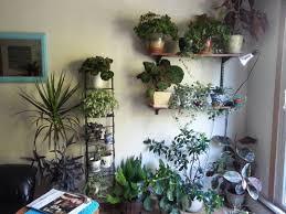 plants that don t need light pothos epipremnum aureum garden mum plant apartment plants balcony
