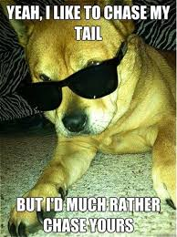 Cool Dog Meme - fantastically funny animal pictures 20 pics kill the hydra