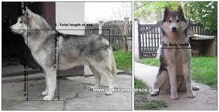 knock down dog house plan