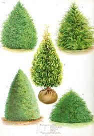 botanical tree types iv http books google com books id