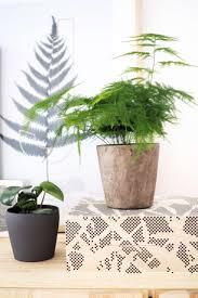 Wohnzimmer Einrichten Pflanzen 51 Besten B L O G L I V I N G Bilder Auf Pinterest Tipps