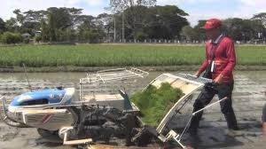 Walk Behind Seed Planter by How To Plant Rice Using Mechanical Rice Transplanter Walk Behind