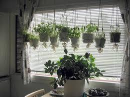 plant a kitchen best ideas about windows indoor window herb garden