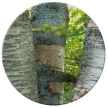 white birch trees plates zazzle