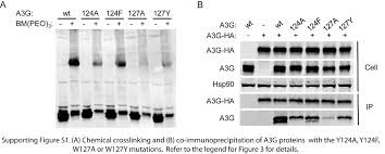 rna dependent oligomerization of apobec3g is required for
