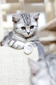 best 25 beautiful kittens ideas on pinterest cute kitty cats