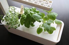 Click And Grow Refills Review Click And Grow Smart Herb Garden
