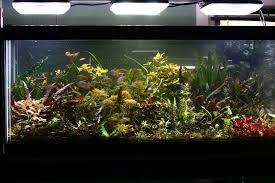 10 gallon planted tank led lighting aquaray led lighting reef planted aquarium lights grobeam