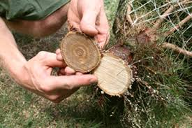 6 tips for perfect christmas tree care