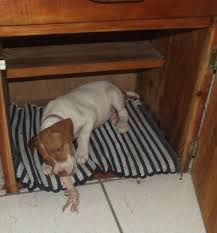 Dog Beds Made Out Of End Tables How To Housetrain A Puppy In 5 Days Using A Cardboard Box Pethelpful