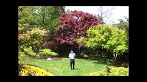 best small trees for gardens cori matt garden