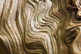 abstract wood waves stock image image of wood stump 42672259