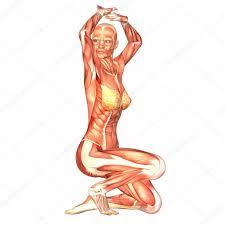 Human Body Anatomy Pics Anatomy Of The Human Body