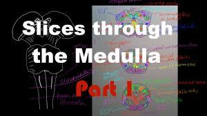 Brainstem Mass Brain Stem Anatomy 2 Slices Through The Medulla Part 1 Youtube
