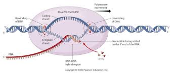 ibbio licensed for non commercial use only biochemistry i