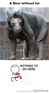 Funny Bear Meme - hairless bear funny bears