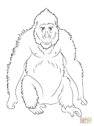 cute gorilla coloring pages animal pictures of gorillas