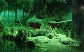 download wallpaper crocodile forest animal alligator free