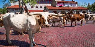 Fort Worth Map Fort Worth Stockyards Business Map Fort Worth Stockyards