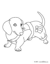 dachshund puppy coloring nice dog drawing kids