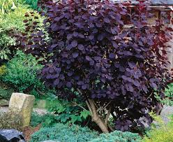 best 25 low maintenance shrubs ideas on front yard