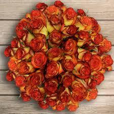 orange roses 50 stem bi color orange roses